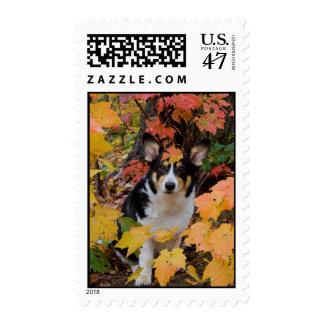 Corgi lindo en colores de la caída sellos