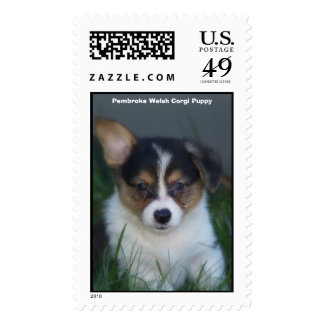 Corgi negro y perrito del moreno, perrito del sello