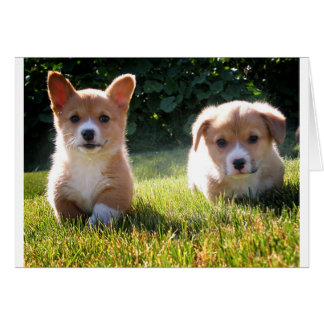 Corgi ( Pembroke ) Puppy Dog Blank Note Card