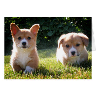 Corgi (Pembroke Welsh) Puppy Dog Note Card