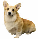 """Corgi Photo Sculpture Magnet<br><div class=""""desc"""">Who wouldn&#39;t like to see this little corgi staring back at them when looking in their locker?  Even better put this magnet on the front of your refrigerator and smile every time you walk by.</div>"""