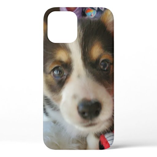 Corgi Puppy or Your Own Photo iPhone 12 Case