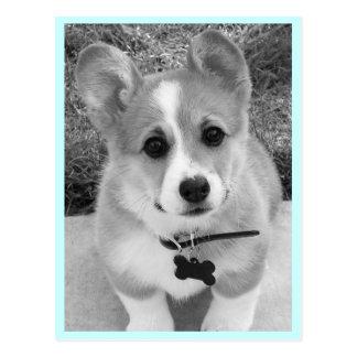 Corgi Puppy Postcard