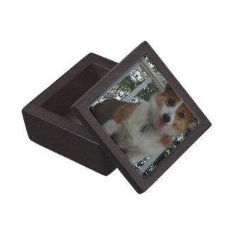 Corgi Puppy Premium Gift Box