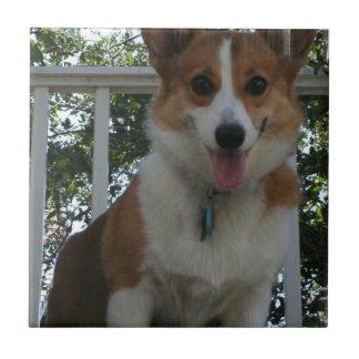 Corgi Puppy Tile