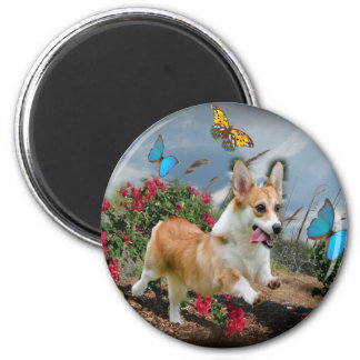 Corgi Runs With Butterflies magnets