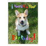 Corgis and Cake Birthday Card