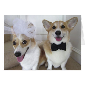 corgis dressed up as bride and groom card