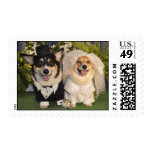 Corgis get married postage stamp