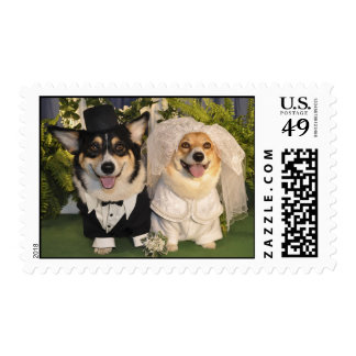 Corgis get married stamp