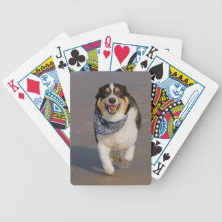 Cori lindo que corre en la playa barajas de cartas