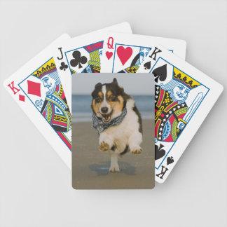 Cori lindo que corre y que salta en la playa baraja cartas de poker