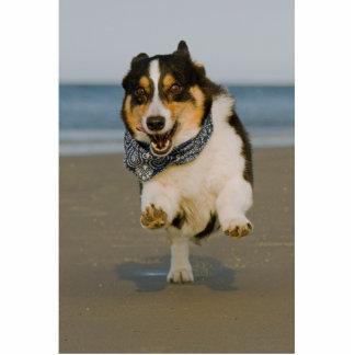 Cori lindo que corre y que salta en la playa escultura fotográfica