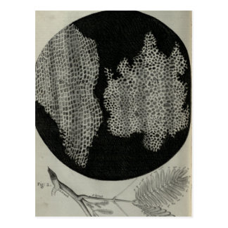 Cork Cells, Robert Hooke Postcard