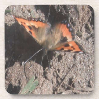 Cork Coaster Set Hairy Butterfly Dirt Foraging