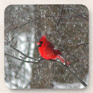 cork coaster with photo of male cardinal