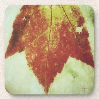 Cork Coasters, Set of six ~ Autumn Leaf Drink Coaster