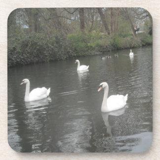 Cork Coasters Swans River Swimming