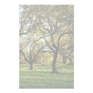 Cork oak forest, Alentejo, Portugal in Europe Stationery