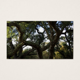 Cork oak or tree of the cork, elegant tree business card
