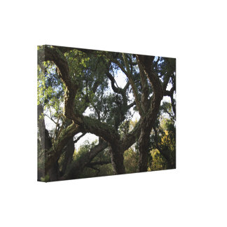 Cork oak or tree of the cork, elegant tree canvas print