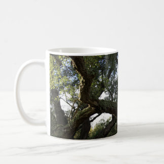 Cork oak or tree of the cork, elegant tree coffee mug