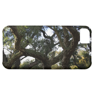 Cork oak or tree of the cork, elegant tree cover for iPhone 5C