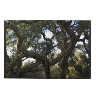 Cork oak or tree of the cork, elegant tree cover for iPad air