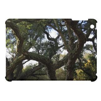 Cork oak or tree of the cork, elegant tree iPad mini cases