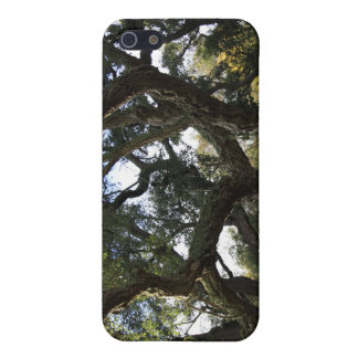 Cork oak or tree of the cork, elegant tree iPhone SE/5/5s case