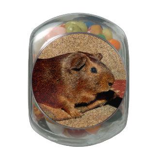 Corkboard Look Guinea Pig Jelly Belly Candy Jars