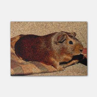 Corkboard Look Guinea Pig Post-it Notes