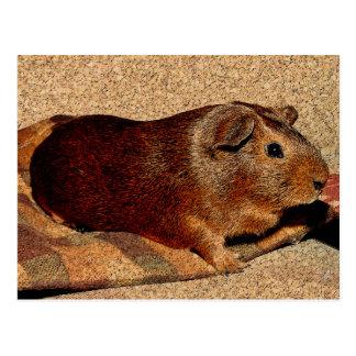 Corkboard Look Guinea Pig Postcard