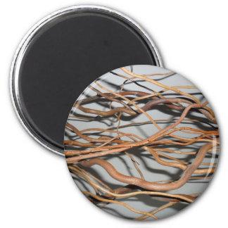 Corkscrew willow, golden curls willow photo 2 inch round magnet
