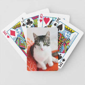 Corky the Cradle Cat playing cards