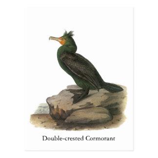 cormorán Doble-con cresta, Juan Audubon Postal