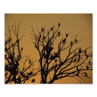 Cormoranes en el amanecer cojinete