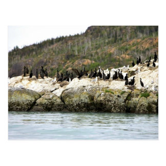 Cormoranes en roca del mar tarjetas postales