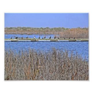 cormoranes en una línea foto