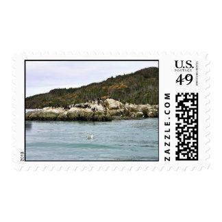 Cormoranes y gaviotas en roca del mar