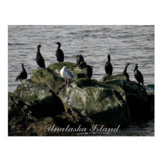 Cormoranes y una gaviota, isla de Unalaska Postal
