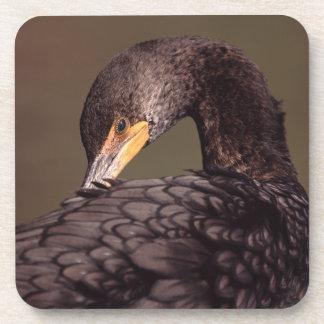 cormorant drink coasters