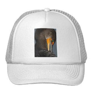 cormorant hats