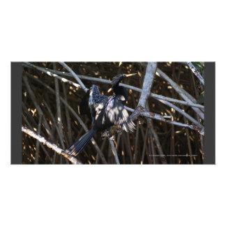 Cormorant in Mangroves Mexico Card