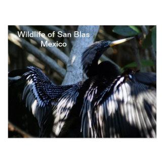 Cormorant in San Blas Tovara Postcard