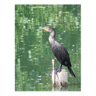 Cormorant  Liberty Park Fallon NV Postcard