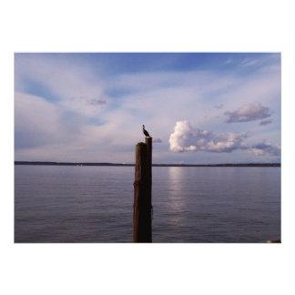 Cormorant On Pole Announcements