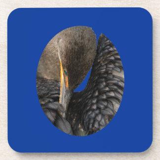 cormorant preening drink coaster
