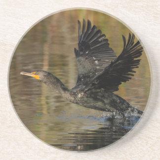 cormorant takeoff drink coasters