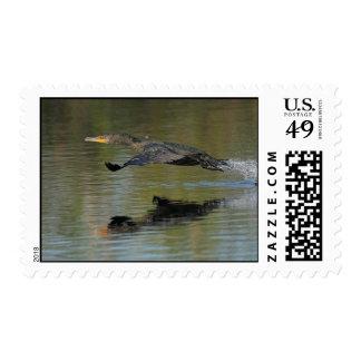Cormorant Takeoff Postage